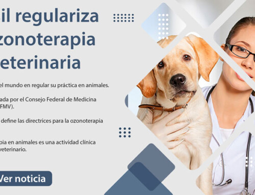 Brasil regulariza la ozonoterapia en veterinaria
